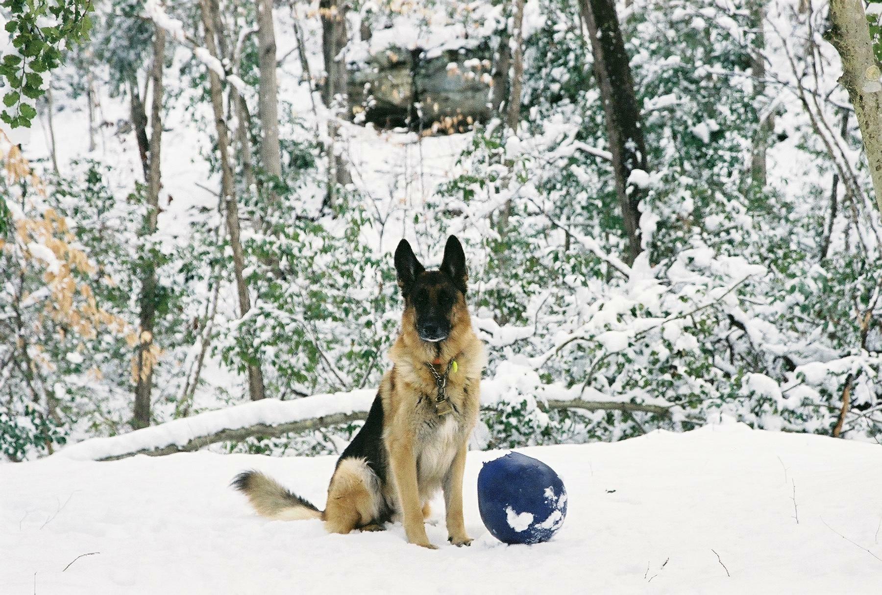 snowheropao.jpg